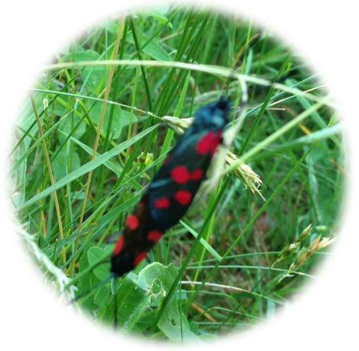 Insectes-jpg.jpg