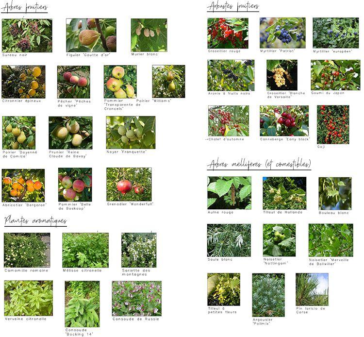 Fruitiers-format-750px-jpg.jpg