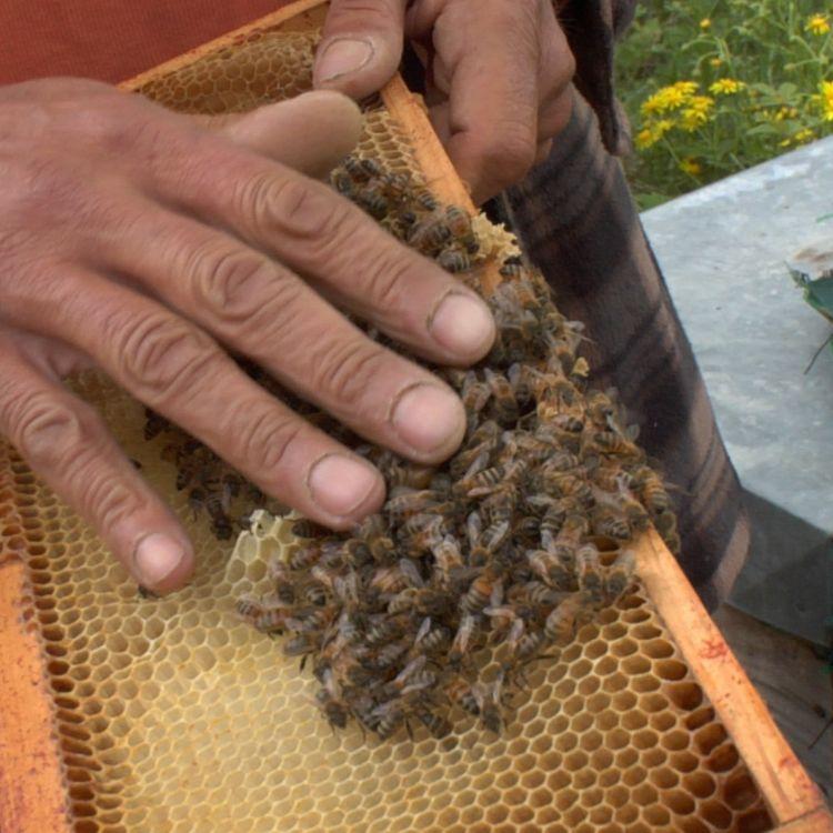 abeille-jpg.jpg