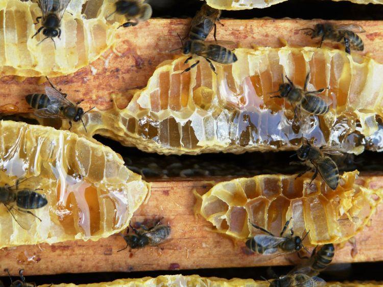 abeilles_750x750-jpeg.jpg