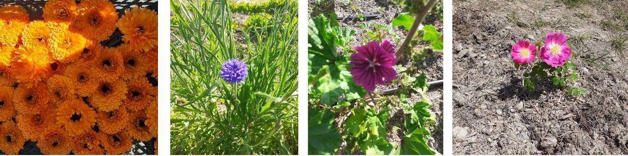fleurs microcosmes