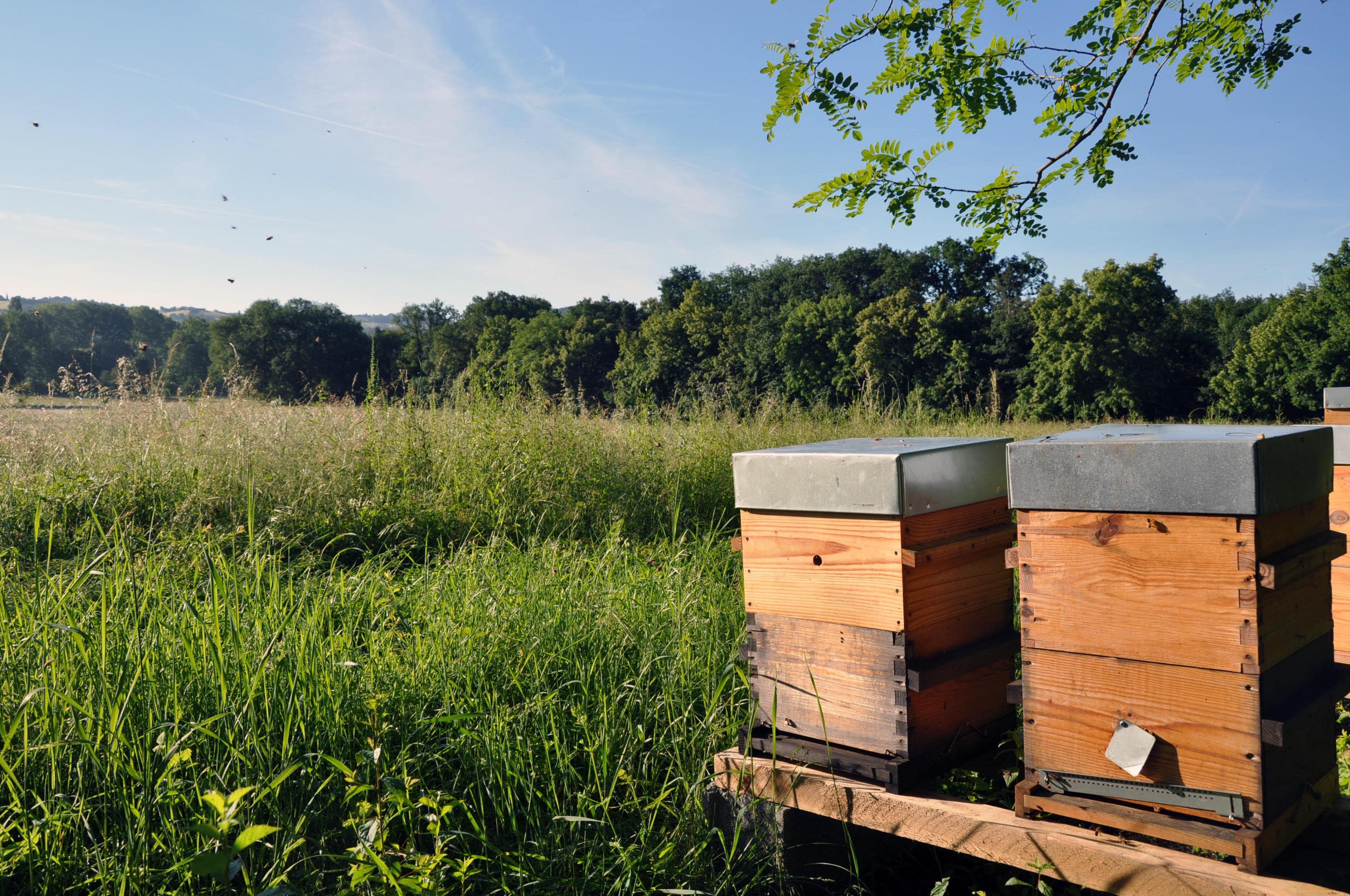 abeille-fleur-hors-cadre.jpg