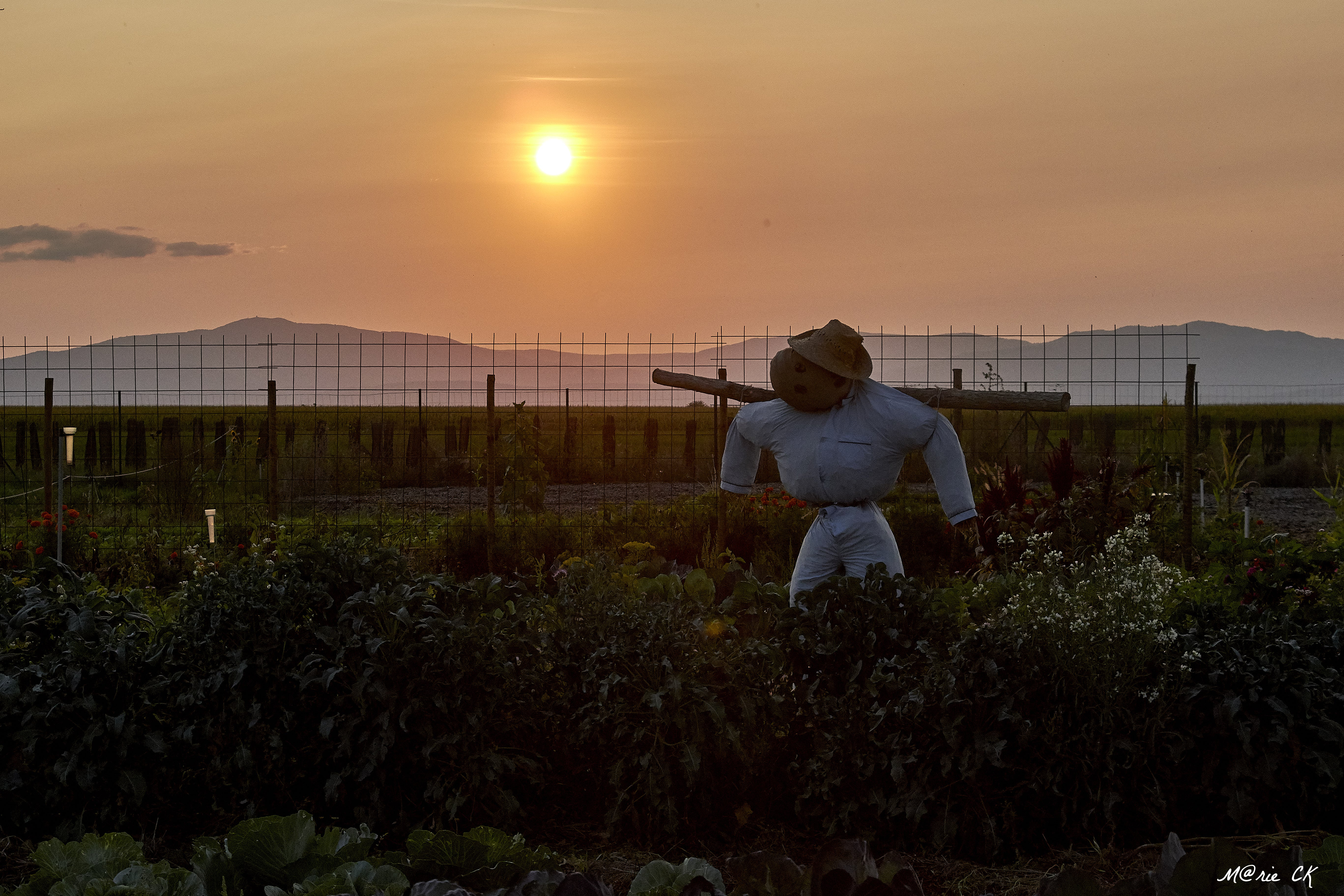 coucher de soleil jardins du leienzug