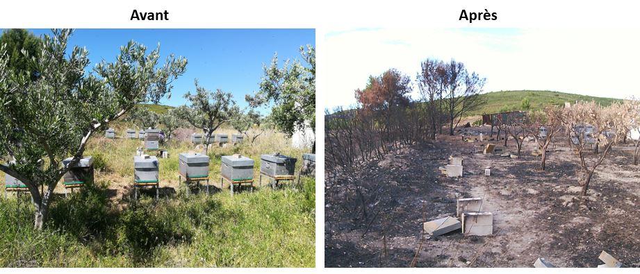 avant apres incendies martigues ruches