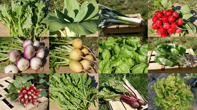 legumes-happy-culture.jpg