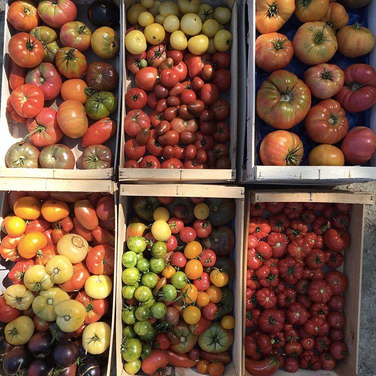 cagettes-de-tomates-jpg.jpg