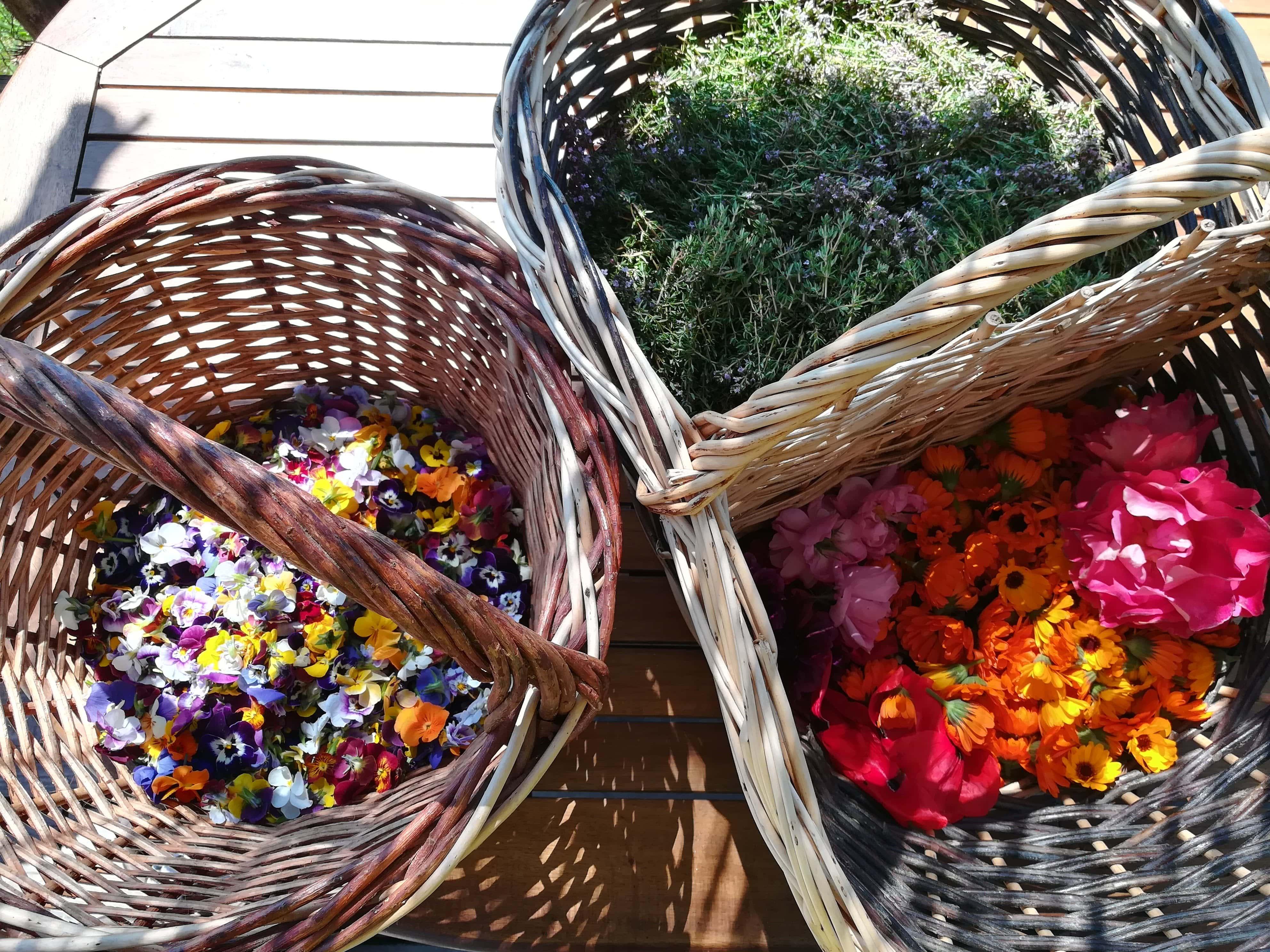 recolte fleurs cabane a plantes