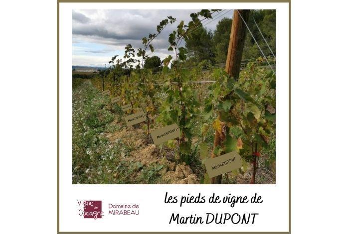 parrainage vigne herault