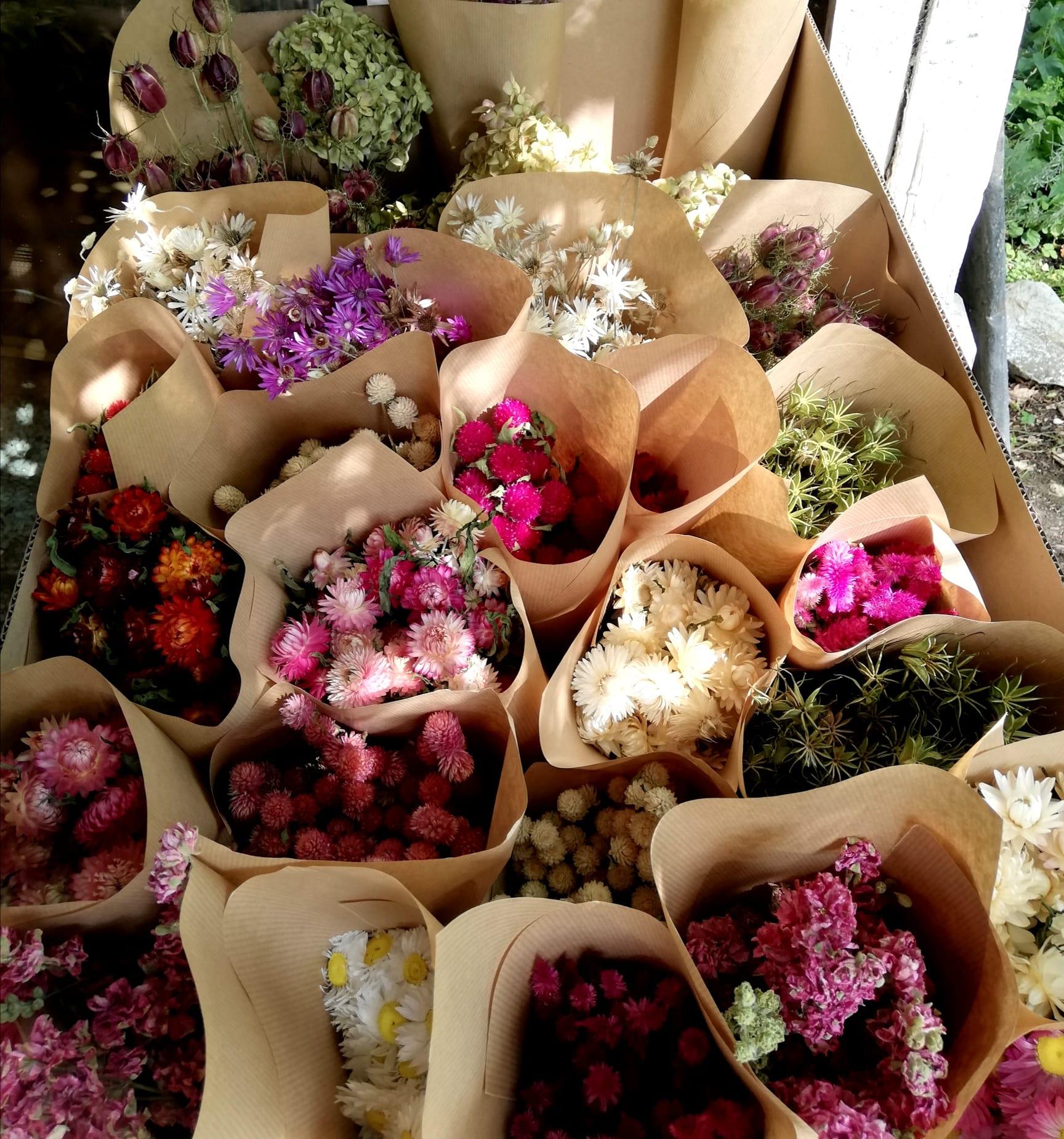 fleurs sechees pampas