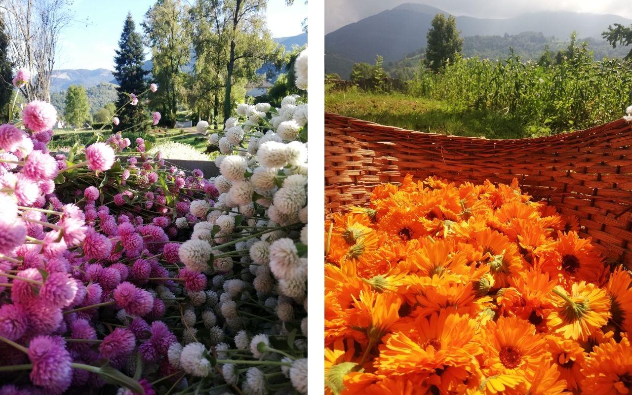 fleurs jardins d'olha