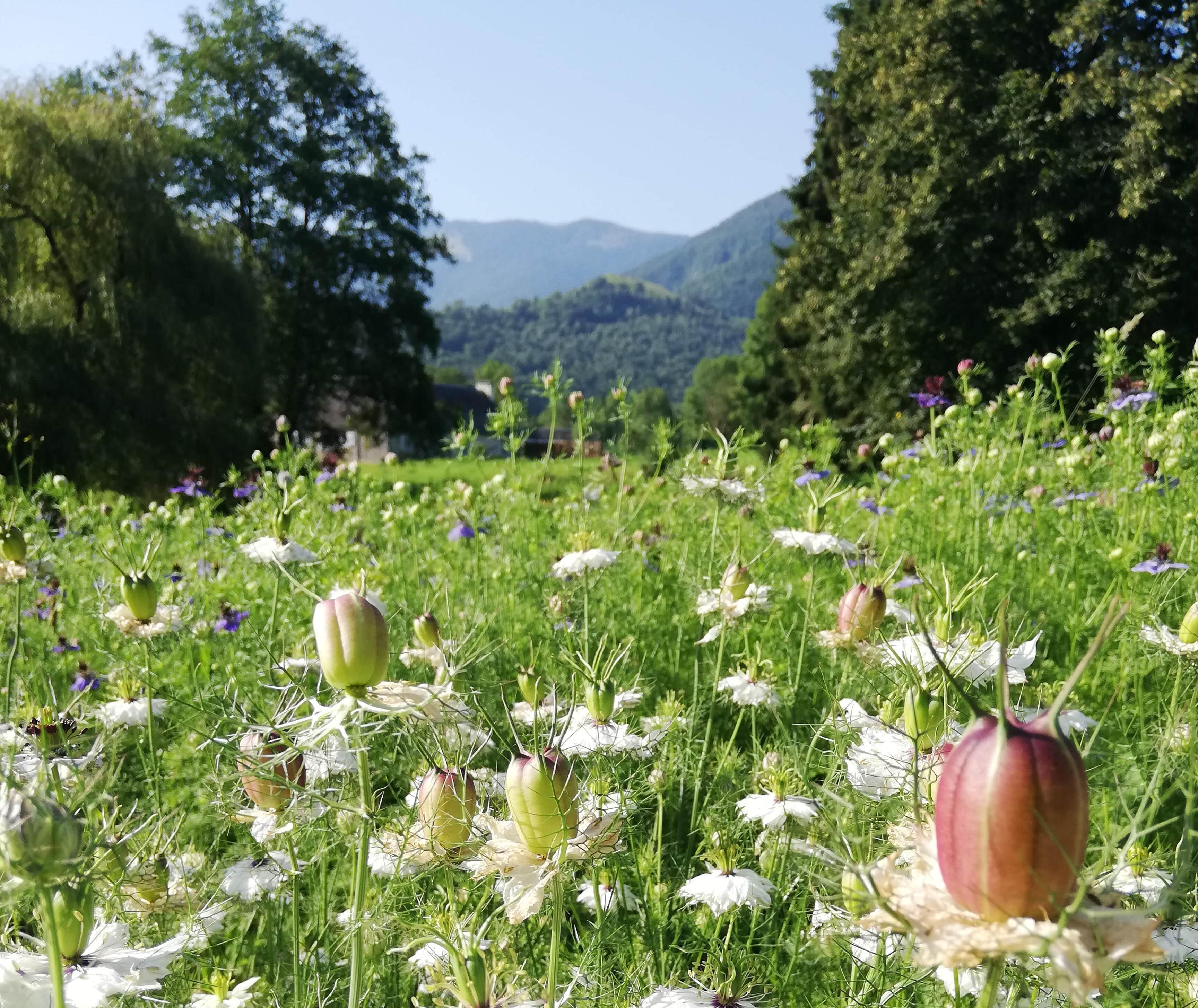 paysage jardins d'olha