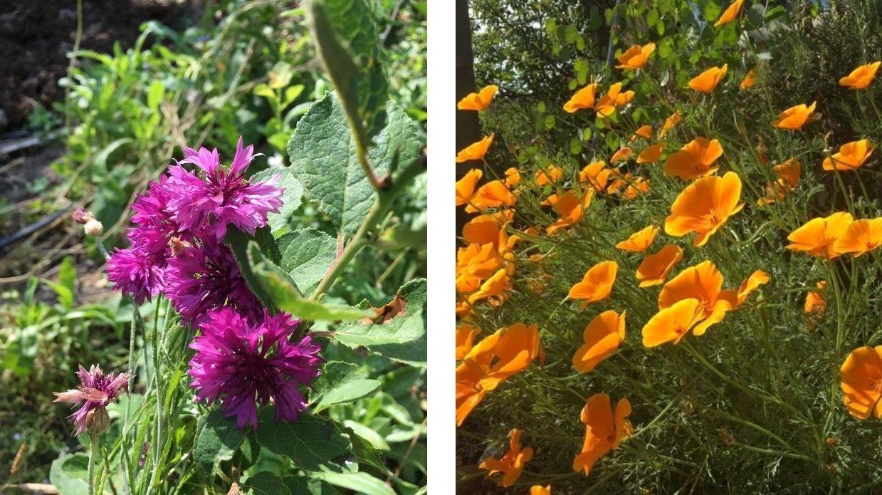 fleurs flower spirit