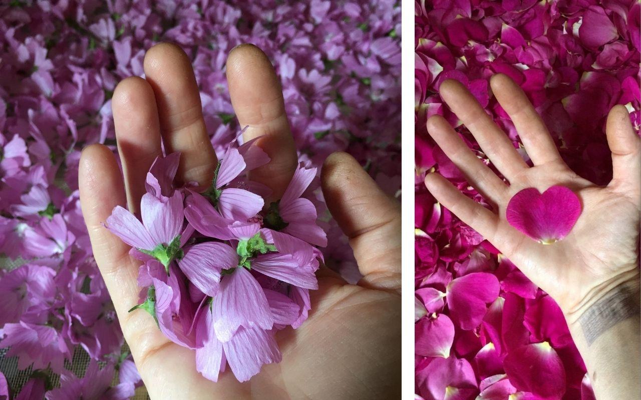 fleurs jardins d'yzorche
