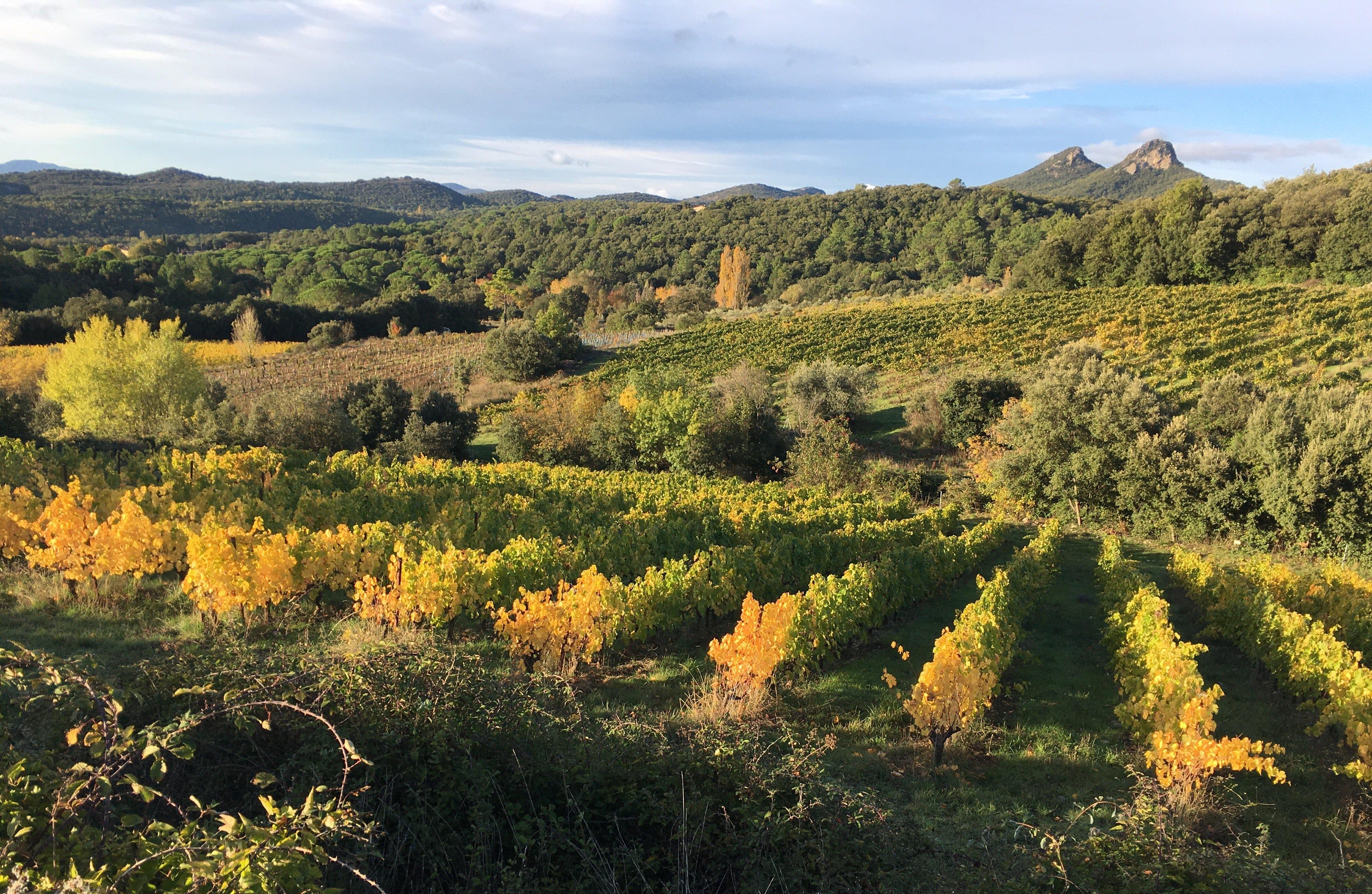 paysage mas seren vignes