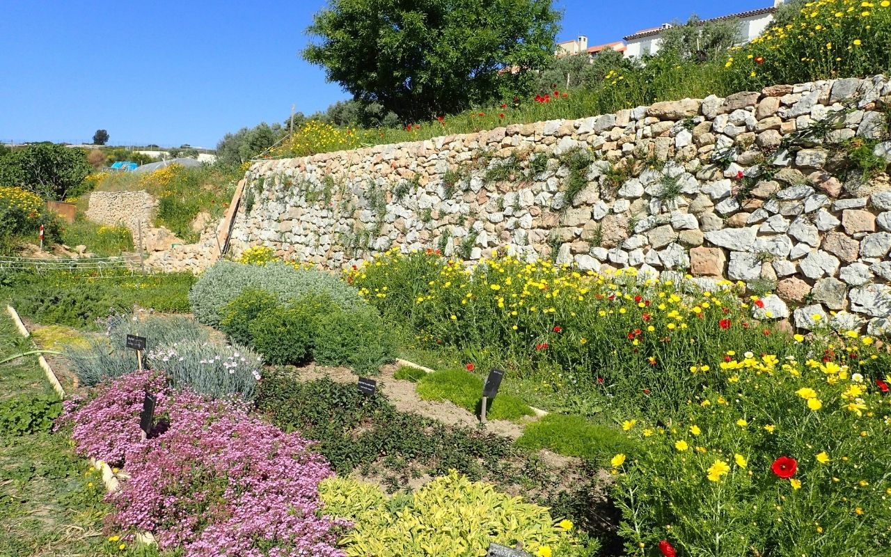 jardin fleurs association colineo