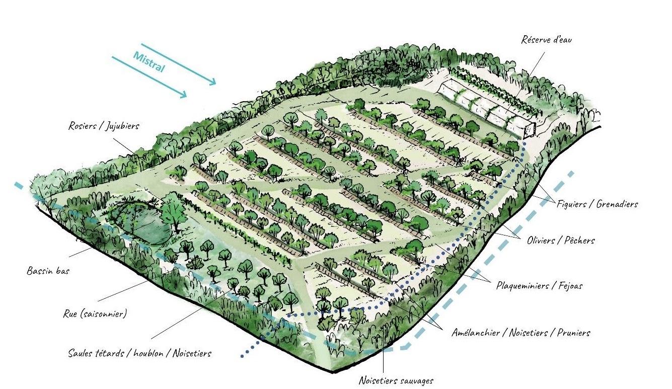 illustration agroforesterie