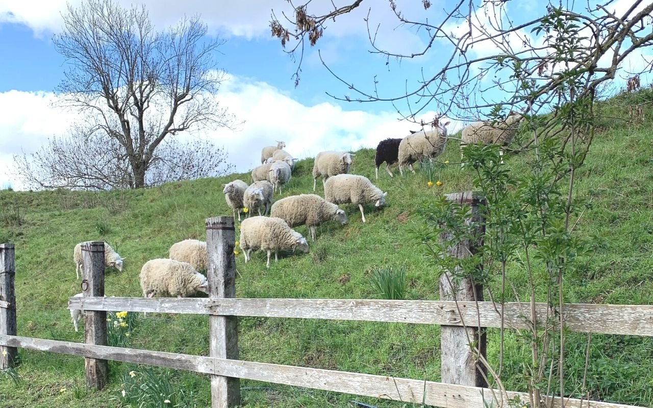 moutons fortmagerie