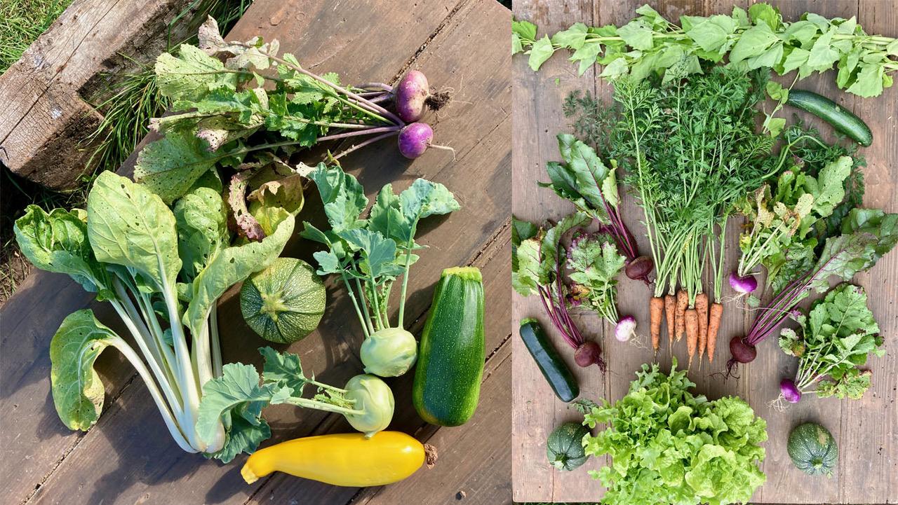 legumes microferme arbre de vie